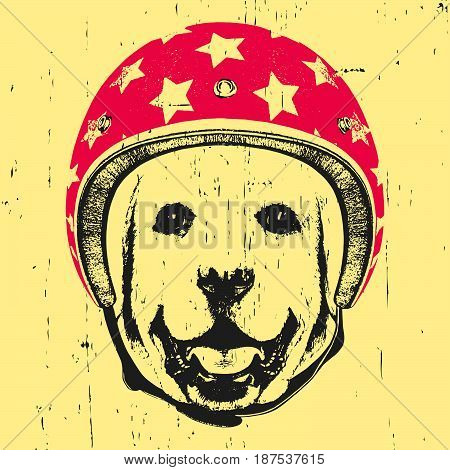 Portrait of Labrador with Helmet. Vector illustration.