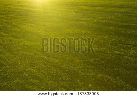 Green Grass Close-up In Sunset. Summer Or Spring Meadow