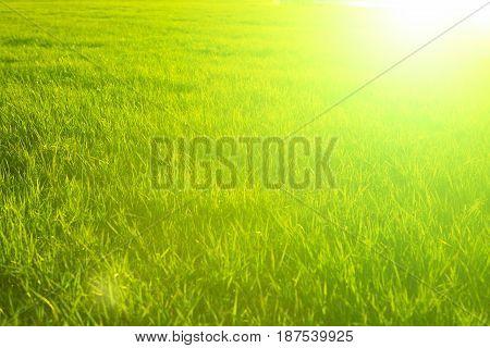Green Background By The Fresh Wild Grass Over Sunbeam