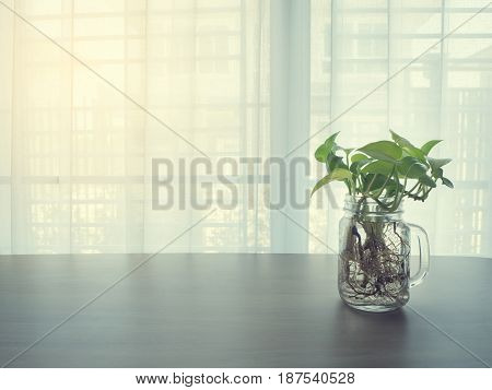 wood table with green betel leaf glass vase on blurry beautiful white drape window texture background.