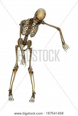 3D Rendering Human Skeleton On White