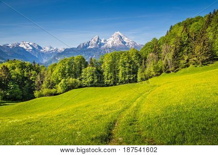 Watzmann Mountain With Green Meadows And Trees, Bavaria, Germany