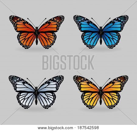 A collection of vibrant multy color insect monarch tiger butterflies. Realistic close-up look delicate wing pattern 4 colour variations.