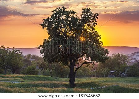 tree at colorful sunset against sun with sun rays