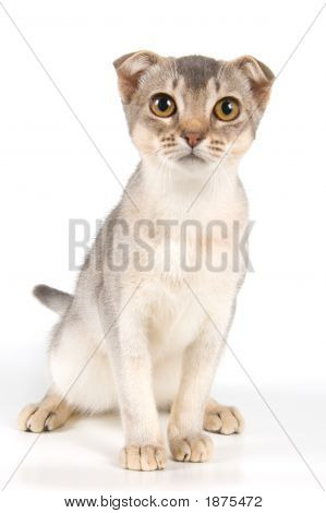 Kitten in studio on a neutral background poster
