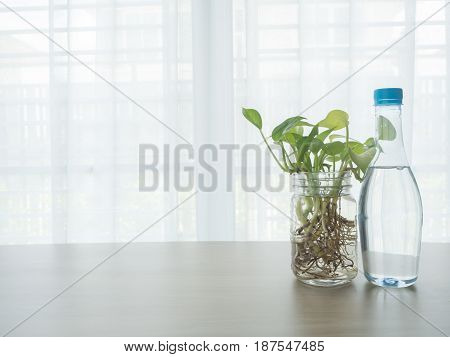 wood table with bottle of water and betel tree on glass vase on blurry beautiful white drape window texture background.