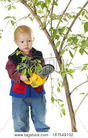 An adorable toddler studying a small tree branch while holding his power chain saw. On a white background.