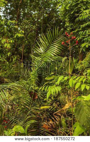 Deep jungle vegetation in Bardia national park, Nepal