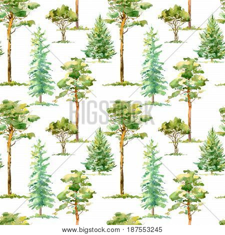 Floral seamless pattern of a pine, spruce and deciduous tree.Watercolor hand drawn illustration.White background.