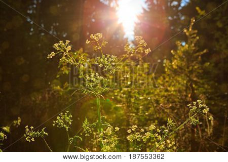 Sun rays shining through trees , nature background.Spring forest