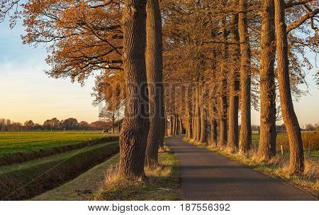 Autumn Trees Along Rural Road In Low Sunlight.