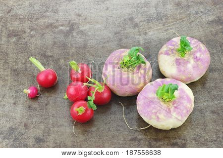 freshly harvested spring turnips (Brassica rapa) and some red radishes on a grunge background