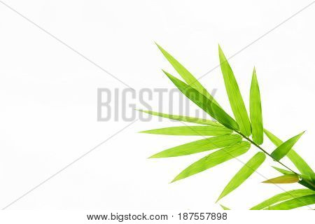 Bamboo leaves with water drops isolated on white background.