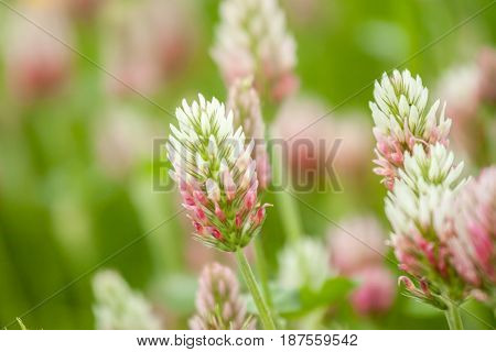 wild field flowers yellow and violet on green grass background