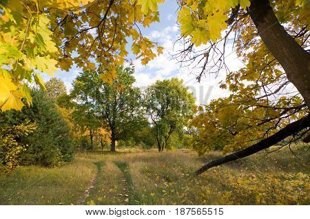 Colorful autumn landscape on a sunny day