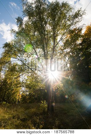 Sun shining right through a tree in autumn colors