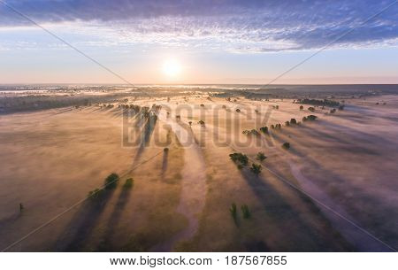 Aerial sunrise with fog at the tree tops in the rural countryside.