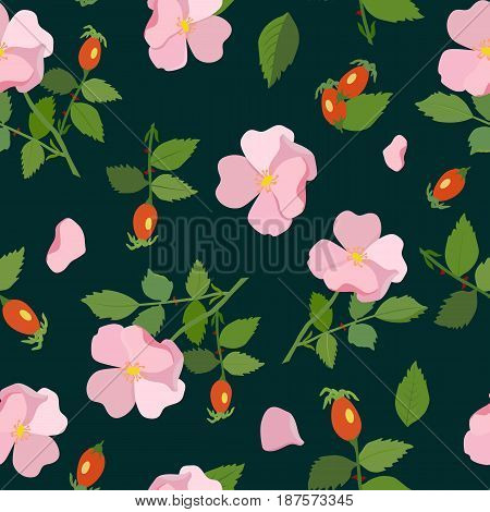 Vector pattern with the image of leaves, flowers and wild rose berries on a dark background.
