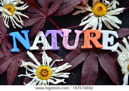 word nature on a  abstract colorful background