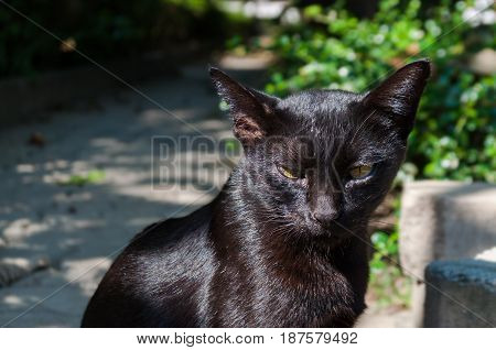 Abandoned crossbreed black cat with yellow-green eyes under sunlight. Outdoor hard shadow. Street animal.