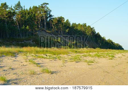 Steep bank and pine forest on the wild empty beach of the Baltic Sea coastline Latvia.