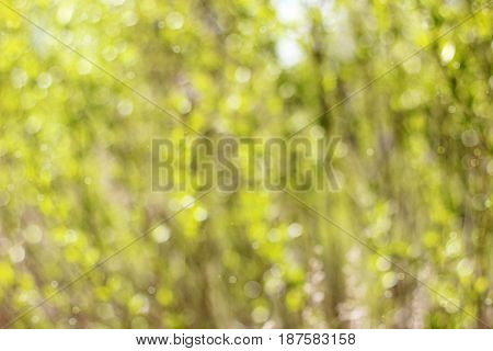 yellow green spring blurred background with bokeh.