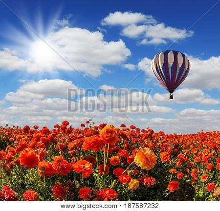 The spring sun and multi-color balloon over the fields of buttercups. Concept of rural and extreme tourism