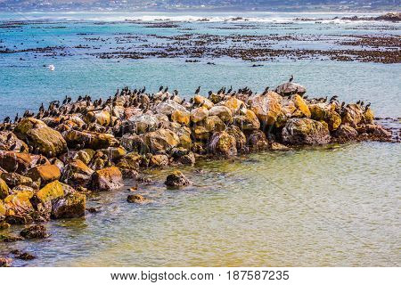 Stone Spit-Peninsula in the Gulf of Ocean. African black-white penguins in Boulders Penguin Colony in the Table Mountain National Park. South Africa. The concept of ecotourism