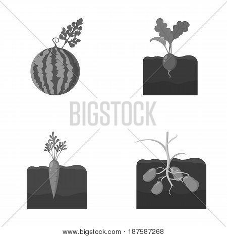 Watermelon, radish, carrots, potatoes. Plant set collection icons in monochrome style vector symbol stock illustration .
