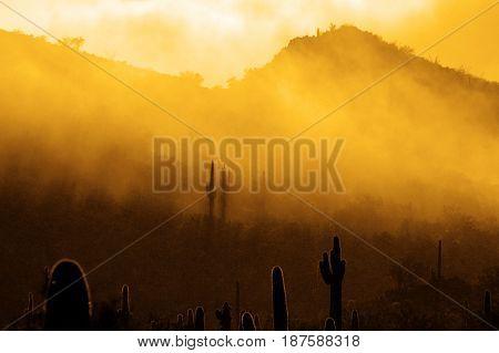 Misty morning in desert with cactus cacti in Arizona wilderness