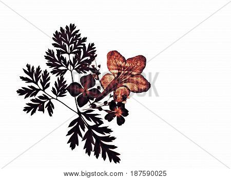 Beautiful floral pressed romantic silhouette flower decoration isolate on white background