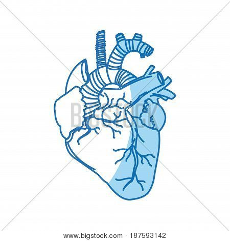 human heart - anatomy biology healthy image vector illustration