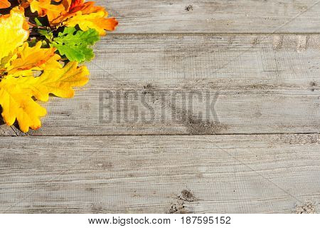 Green, yellow and red autumn leaves on a wooden table.