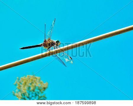 A dragonfly balancing on wire on a beautiful day