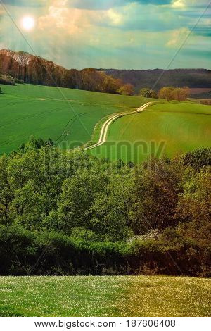 Spring wooden-steppe landscape with a country road on a background at sunset