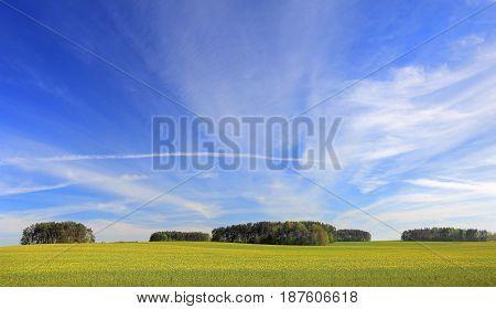 Sunny summer landscape. Blue sky over field. Summer sunny background.