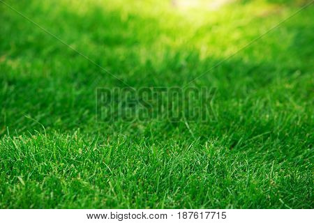 The background of fresh green lawn grass