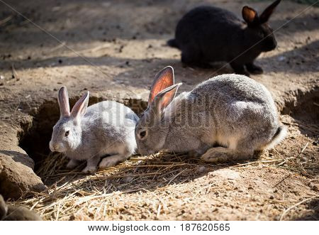 Hares on the ground in the wild .