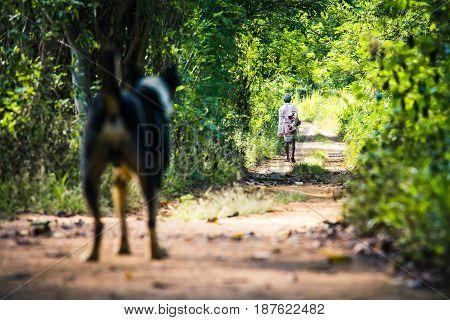 A dog looks on as a man walks away from him in a forest path close to Sigiriya Sri Lanka.