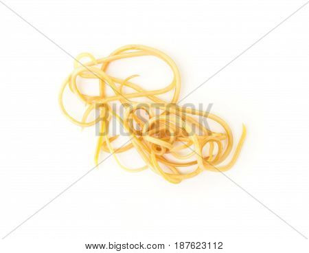 Helminthiasis Toxocara canis (also known as dog roundworm) or parasitic worms from little dog on white background Pet health care concept