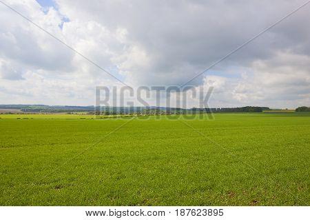 Scenic Wheat Fields