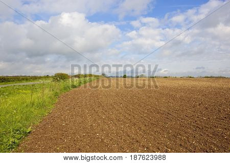Cultivated Soil And Hedgerow