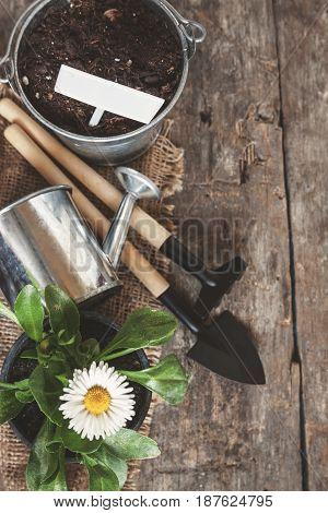 Garden Tool, Shovel, Rake, Watering Can, Bucket, Tablets For Plants, Flower Daisy In A Flower Pot On