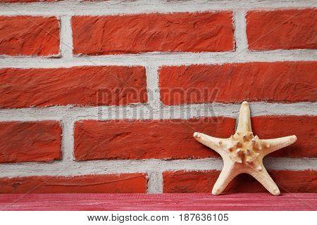 Starfish on red brick wall background, close up