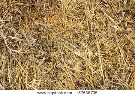 Background from last year's withered grass similar to hay