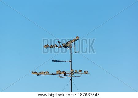 many small birds sitting on wires in the winter air