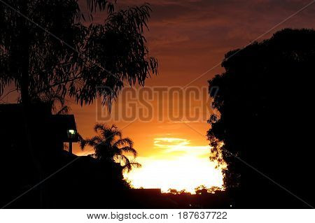Australian suburban sunset orange sky with gum tree silhouette