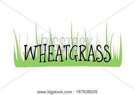 Wheatgrass logo organic natural wheat, fresh food, plant green, herbal juice, vegan vitamin, detox seed, health, isolated. Grass freshness, healthy diet, agriculture vector. Antioxidant grow