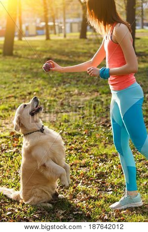 Dog performs commands of woman in park during day