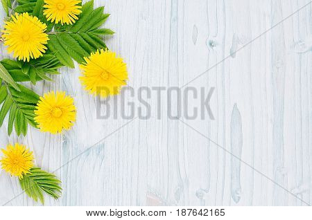 Decorative spring frame of yellow dandelion flowers and green leaves on light blue wooden board. Copy space top view.